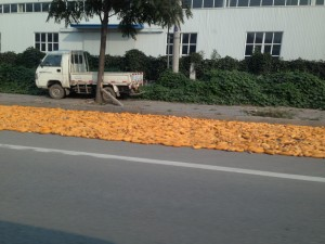The Chinese just have a knack for making do.  This farmer found the perfect place to dry his corn crop on the public street outside of a modern factory.